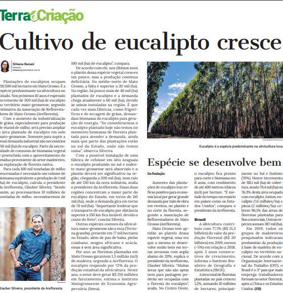 Jornal A Gazeta de 26/10/2020: Cultivo de eucalipto cresce