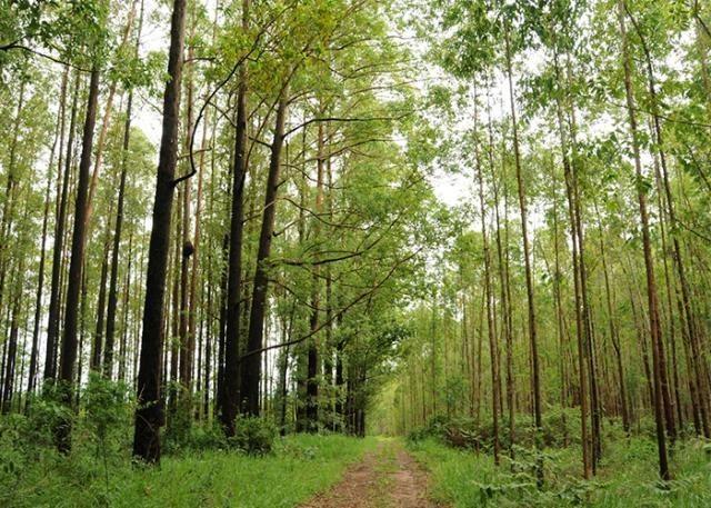 Exportação de produtos florestais cresce e segmento já é o segundo da pauta do agro